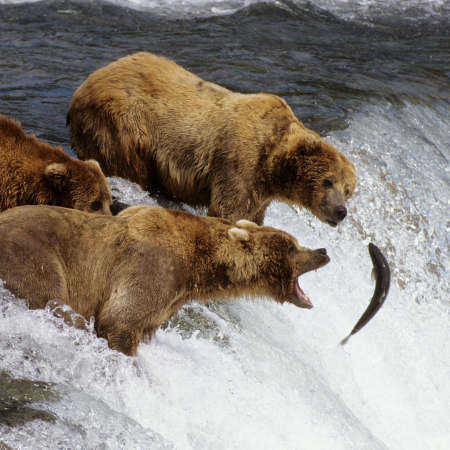 Bears and the other 7 wonders of Kamchatka
