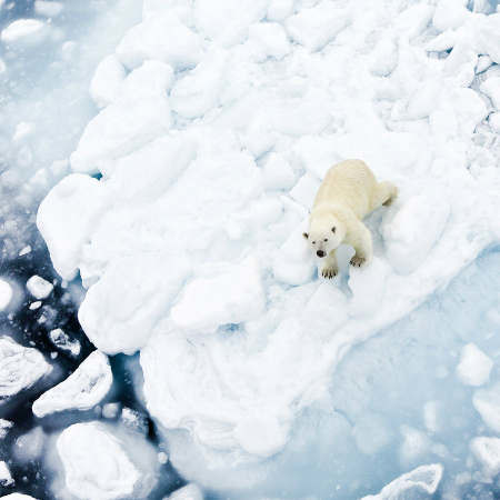 In the polar bear's kingdom