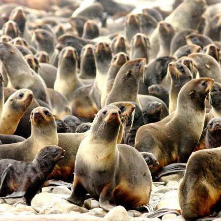 Sea lions and birds
