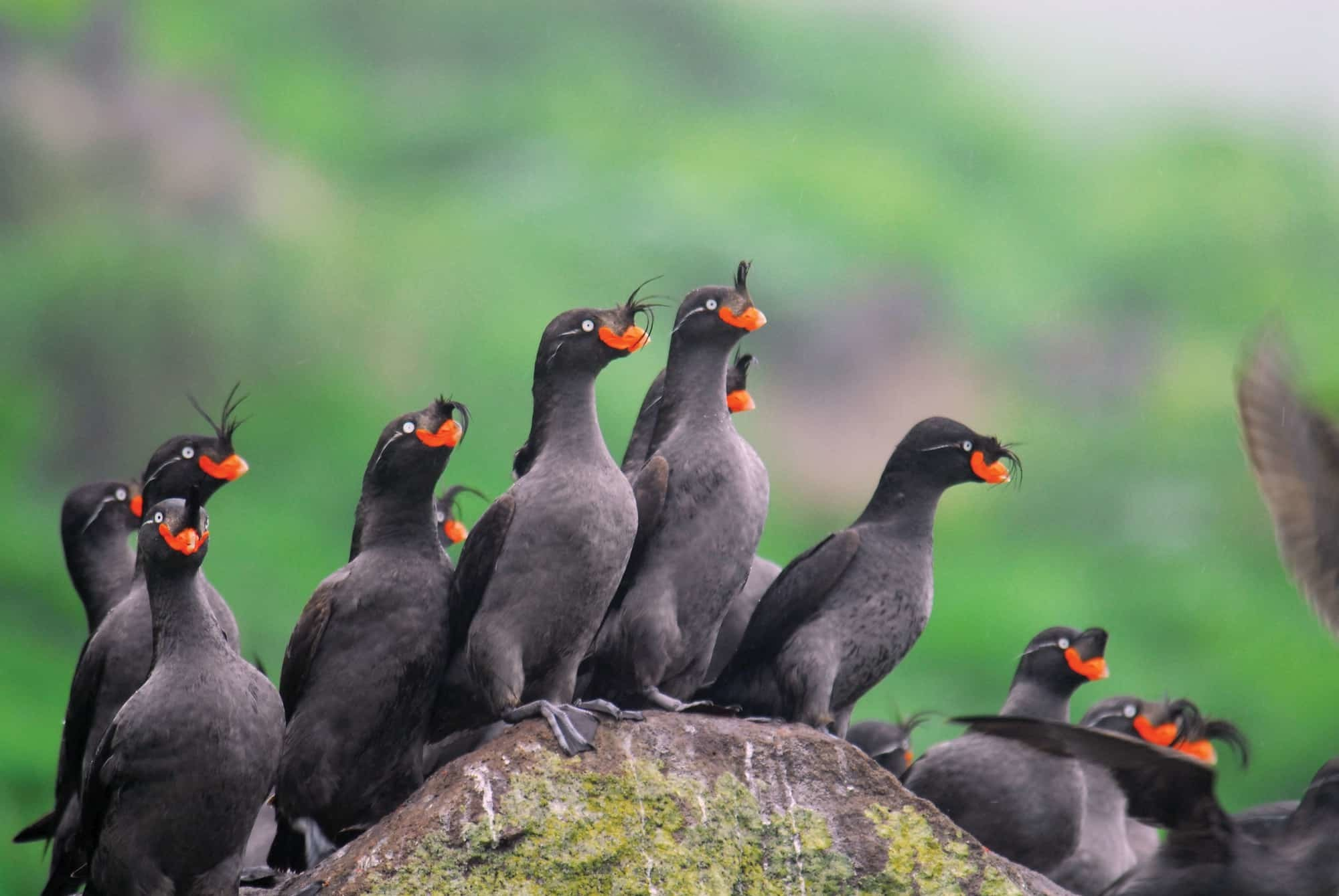 Птицы камчатки фото и названия